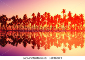 rolig 2015 stock-photo-coconut-palms-at-sunset-over-tropic-sea-185953499